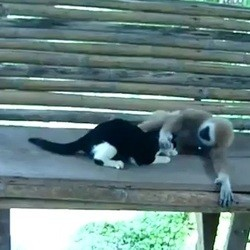 singe chat jouent video