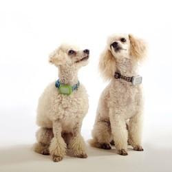 collier pour chien sniftag