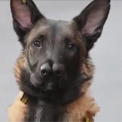 Snuffles, un chien à deux nez