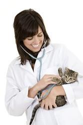 soigner son chat véto