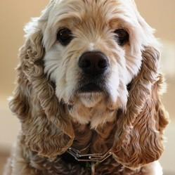 soigner son chien naturellement