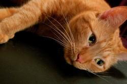 soins chat parasites