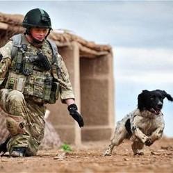 soldat chien renifleur tués afghanistan