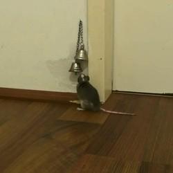 une souris sonne pour qu'on lui ouvre la porte