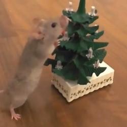 une souris décore un sapin de noël
