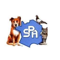 SPA : un nouveau conseil d'administration pour l'association - Cause ... Yorkshire Terrier 911