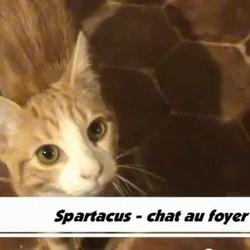 spartacus video de chat podcast