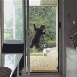 un chat s'accroche à la fenêtre