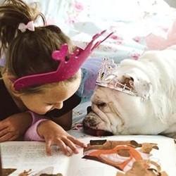 bulldog et fillette