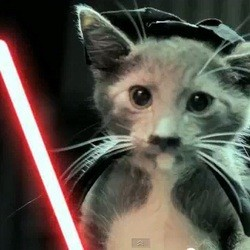 video chaton star wars jedi