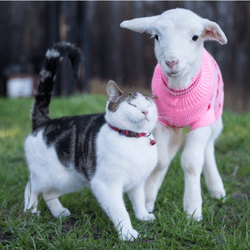 chat ferme stitch