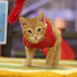 chat handicapé