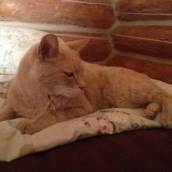Stubbs, le chat maire d'Alaska