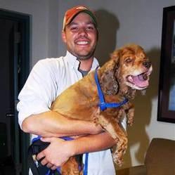 chien paralysie pattes tornade