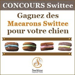 concours macarons friandises chien