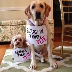 des chiens soutiennent les chiens errants de sotchi