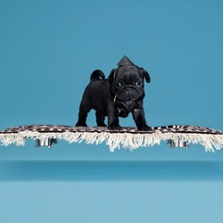 un tapis volant pour chien