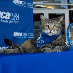 tara chat héros