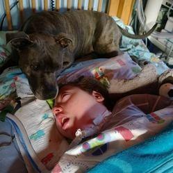un chien veille sur un petit garçon handicapé