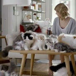 taylor swift entourée de chats