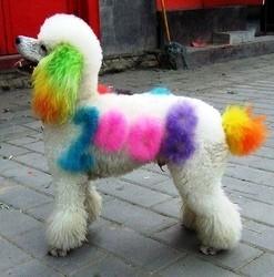 teinture chien chine
