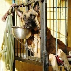 thailande millier chiens sauves restaurant