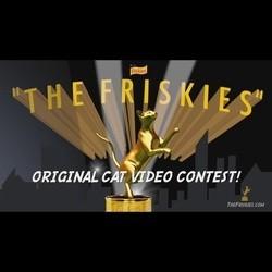 concours vidéos chats oscars friskies awards