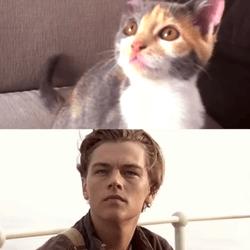 des chatons rejouent titanic