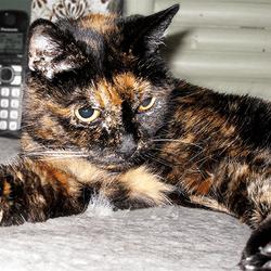 tiffany two plus vieux chat du monde