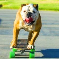 tillman bulldog skateboard surf video