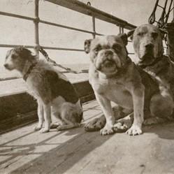 titanic chien heros