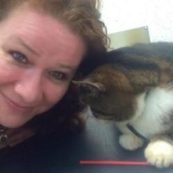 elle retrouve son chat 12 ans après sa disparition