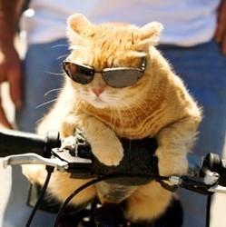 chat sur vélo avec lunettes
