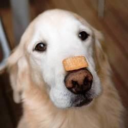 tour chien friandise sur museau