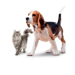 gps chien chat perdu tratcive