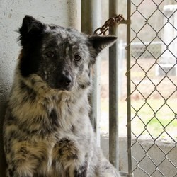 trafic chien chat, spa, cellule anti trafic