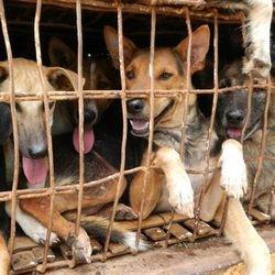 Brigitte Bardot lance un appel contre le trafic de chiens en Thaïlande