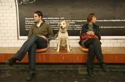 chien metro