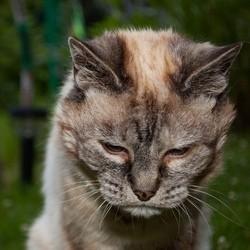 chat déprimé chat triste après la perte de son compagnon félin
