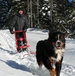 trottinette des neiges tirée par un chien