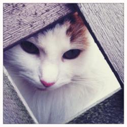 portrait photo de chat