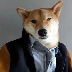 un chien prend la pose comme un mannequin avec des vêtements pour homme