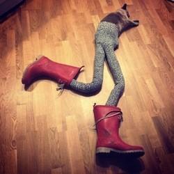 un chat avec des collants