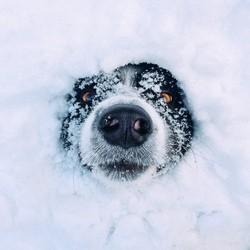chien caché