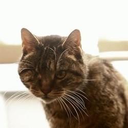 chat le plus vieux du monde
