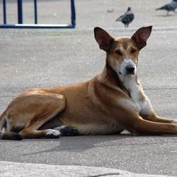 euro 2012 ukraine brule chiens errants