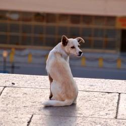 chien errant ukraine euro 2012 massacre football
