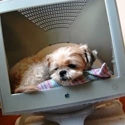 carnet santé animaux en ligne umanlife