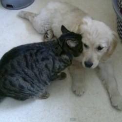 un chat et un chiot se font un câlin