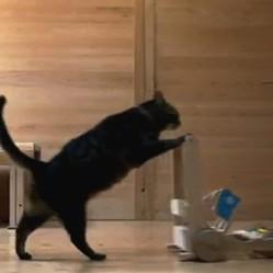 un chat pousse une poussette en bois